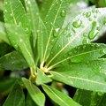 Seven Life Processes of a Plant