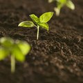 4 Types of Soil Conservation