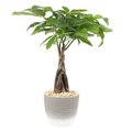 Best Houseplant to Buy in January