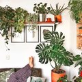 The #PlantLady Instagram Pics We're Getting Major Inspo From