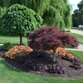 How to Create a Shrub Island Landscape Berm