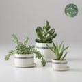 Green Thumbs Up: The Best Places to Shop for Indoor Planters