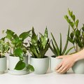 The Next Plant You Should Get Based on Your Enneagram Type
