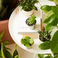 Add to Cart: Potted Indoor Plants Mailed to You