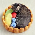 12 Holiday Gifts Your Cat Needs