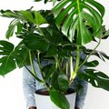 These Houseplants Are Sure to Impress