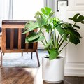 Indoor Plant Ideas & Inspiration