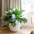 Indoor Plant Ideas: Decor & Accessories