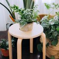 Got Houseplants? From Stool to Plant Stand, This IKEA Hack Is Simply Awesome