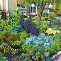What Is Edible Landscaping?  How Do I Get Started?