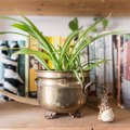 Are You a Houseplant Killer? 7 Deadly Sins You Need to Stop Doing