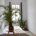 These 8 Uncommon Houseplants Are Ideal for Low-Light Rooms