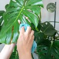 Clean Your Plants With This Unusual Condiment (It REALLY Works)