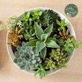Succulents as Indoor Plants: How to Care for Them Properly