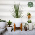 Plant Week: The Decor and Accessories Every Plant Owner Needs