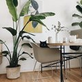 10 Minimalist Indoor Plants to Add to Your Home ASAP