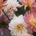 Easy Summer-Flowering Bulbs to Plant Now for Future Garden Glory
