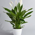 Best Plant to Buy in April