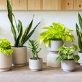 The Sill Just Restocked This Sold-Out Instagram-Ready Plant