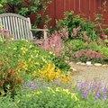 Tips for Designing a Native Garden