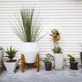 The Decor and Accessories Every Plant Owner Needs