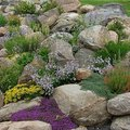 Tips for Designing a Rock Garden