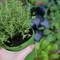 Want to Grow an Herb Garden? Follow These (Easy) Steps