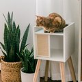 We LURVE the IKEA Lurvig Cat House, Especially With These Cute Upgrades