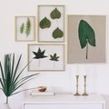 How to Frame Real Leaves to Create Original Botanical Art