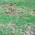 Grub Control: How to Get Rid of Lawn Grubs