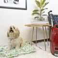 The Complete Guide to Cleaning a Pet-Friendly Home