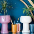 Search No More: 16 Planters with Drainage, from Bold to Minimal