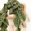 Indoor Plants That Clear out Negative Energy and Bring Harmony Into Your Home