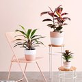 This Brand Curates Plant Collections for You, Complete with Cute Planters
