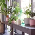 Bad Plant Parents: IKEA's Plant Selection Will Turn You Around