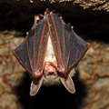 How to Attract Bats for Natural Mosquito Control