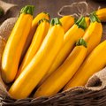 How to Know When Yellow Squash Is Ripe