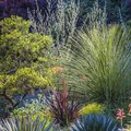Tips for Designing a Xeriscape Garden
