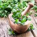 How to Keep Fresh Cut Mint Fresh