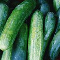 How to Care for Zucchini