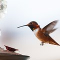 What To Put In My Hummingbird Feeder