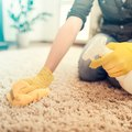 How to Remove Vomit Smell From Carpet