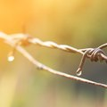 How to Attach Barbed Wire to T-Posts