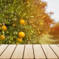 What Time of Year Do Tangerine Trees Bloom?