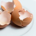 Do Eggshells Sharpen a Garbage Disposal?