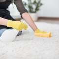 How to Get Rid of a Mildew Odor in Carpet