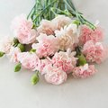 Meaning of Carnation Colors