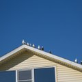 How To Get Rid Of Birds Near Your Home