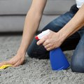 Ways to Freshen Smelly Carpet