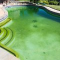 Home Remedy for a Green Pool